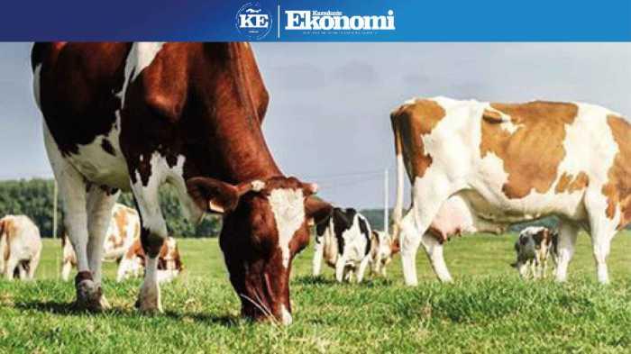 Hayvancılıkta üretim bazlı destek sistemine geçilmeli!